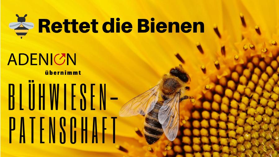Rettet die Bienen - Adenion übernimmt Blühwiesen-Patenschaft